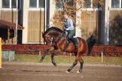 Молодая женщина скакать на коричневой лошади Стоковое Фото