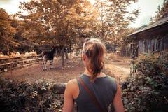 Молодая женщина смотря животных в зоопарке стоковые фотографии rf