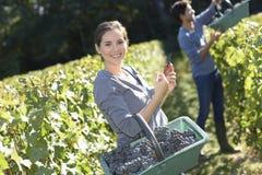 Молодая женщина с корзиной виноградин в винограднике Стоковое Фото
