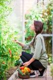 Молодая женщина с корзиной растительности и овощей в парнике время хлебоуборки к Стоковые Изображения