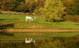 Молодая женщина с лошадью в озере стоковые изображения