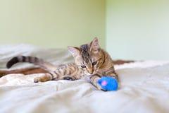 Молодая игра кота Стоковая Фотография