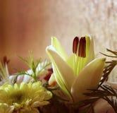 Молодая лилия бутона Стоковые Изображения RF