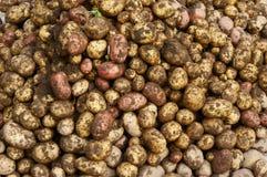 Молодая картошка Стоковые Фото