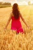 Молодая красивая женщина в поле пшеницы стоковое фото rf
