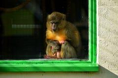 Молодая обезьяна стоковая фотография