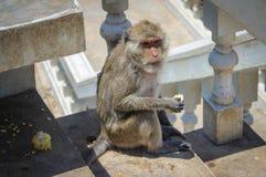 Молодая обезьяна Стоковые Изображения