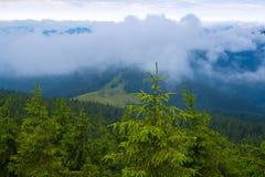 Молодая свежая ель на предпосылке зеленых холмов Стоковое Изображение RF