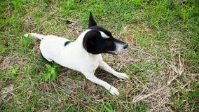 Молодая собака в высокорослой траве Стоковая Фотография