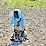 Молодая собака от жары одела в хозяине футболки стоковые фото