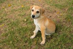 Молодая собака Стоковые Изображения