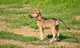 Молодая собака warily смотря в расстояние Стоковые Изображения