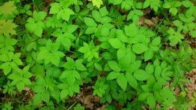 Молодая сочная листва Стоковые Изображения RF