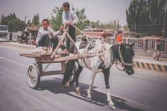 Молодая тележка верховой лошади мальчиков Стоковое Изображение RF