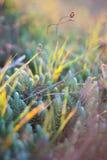 Молодая трава весны на заходе солнца Стоковые Изображения RF