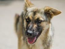 Молодая ухищренная собака Стоковые Фотографии RF