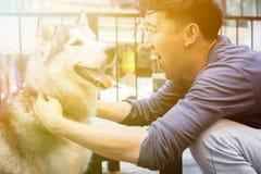 Молодое азиатское мужское предприниматель собаки играя и касаясь счастливый осиплый сибирский любимчика собаки с влюбленностью и  Стоковое Изображение RF
