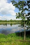 Молодое дерево на побережье озера Стоковые Фото