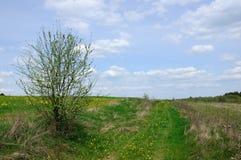 Молодое дерево около дороги поля Стоковые Изображения RF