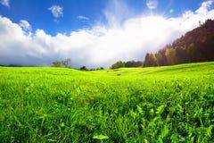 Молодое свежее зеленое поле на лете Стоковая Фотография