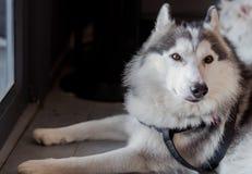 Молодое усаживание собаки Стоковое Изображение RF