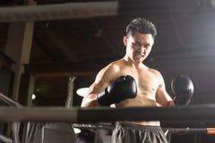 Молодой атлетический профессиональный боксер стоит на кольце стоковые изображения rf