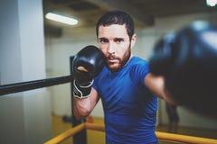 Молодой боксер делая некоторую тренировку на груше на кольце Бородатая кавказская тренировка разминки тренировки боксера в спортз Стоковая Фотография