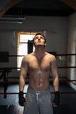 Молодой боксер смотря вверх на свете Стоковые Изображения