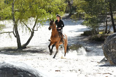 Молодой всадник в лесе Стоковое Изображение