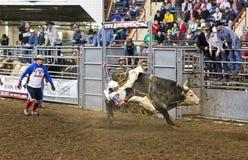 Молодой всадник Bull Стоковые Фотографии RF