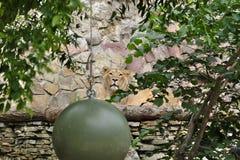 Молодой лев на платформе Стоковая Фотография