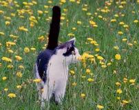 Молодой деревенский кот на лужайке Стоковое Изображение