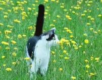Молодой деревенский кот на лужайке Стоковое Фото