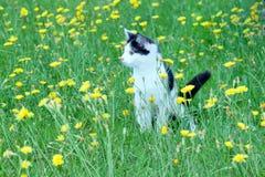 Молодой деревенский кот на Стоковая Фотография RF