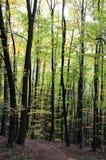 Молодой лес стоковое изображение