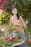 Молодой женский садовничать с тачкой Стоковое Фото