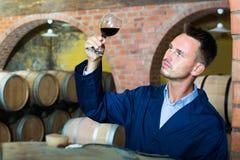 Молодой заботливый работник винодельни держа бокал вина в погребе Стоковые Изображения
