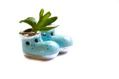 Молодой завод в винтажной вазе в форме обуви детей Стоковая Фотография