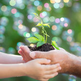 Молодой завод в руках против зеленой предпосылки Стоковое Изображение