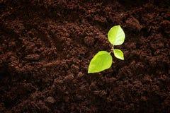молодой завод растя в свежей земле новая концепция старта и экологичности Стоковые Изображения RF