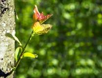 Молодой зеленый росток дерева от ствола дерева в лесе Стоковое Фото