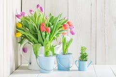 Молодой и свежий тюльпан Стоковые Изображения RF