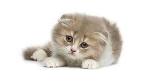 Молодой котенок створки гористой местности лежа вниз стоковая фотография