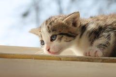 Молодой котенок Стоковые Фото