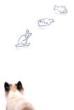 Молодой кот голода мечтает о еде стоковое изображение