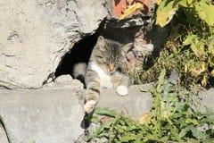 Молодой кот греясь в солнце Стоковая Фотография RF