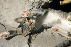 Молодой кот греясь в солнце Стоковые Фотографии RF