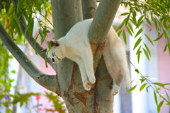 Молодой кот на ветви Стоковое фото RF
