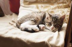 Молодой кот спать на кресле Стоковая Фотография