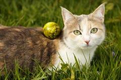 Молодой кот Стоковые Фото
